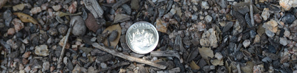 Dimes - like this one found in the middle of a hiking trail in the San Bernardino National Forest - have proven to be motivation to keep moving forward.