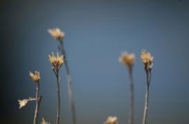 Flowers-BigBear-1200
