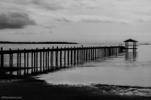 Private pier on Saint Ansdrews Bay in Panama City Florida Black and White